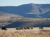 South African safari - 176047773