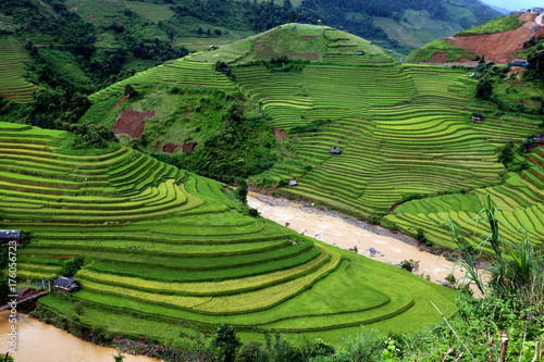 Foto op Aluminium Rijstvelden Rice fields on terraced of Vietnam