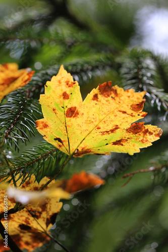 Nice autumn leaf