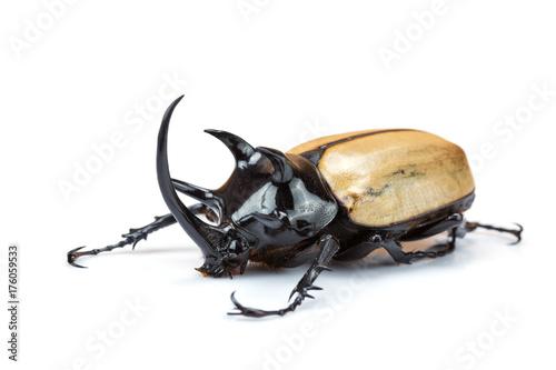 Aluminium Neushoorn Closeup Rhinoceros beetle isolated on white background