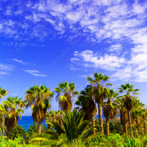 Deurstickers Canarische Eilanden Tropical background. Palms and ocean Canary Islands
