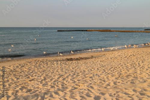 Plaża Mewy Morze Bałtyckie