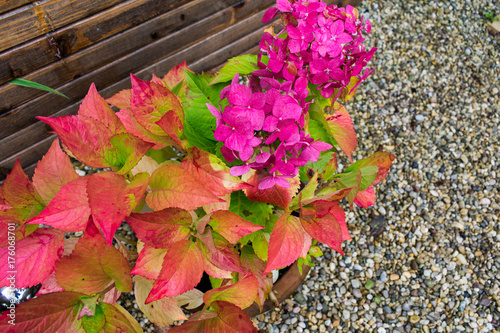 Keuken foto achterwand Herfst Red, pink, yellow and green colored autumn garden flowers after rain