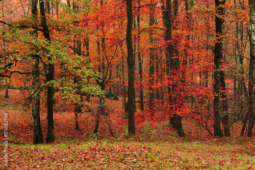 Fotobehang Rood traf. red autumn park
