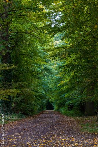 Papiers peints Route dans la forêt Forest path