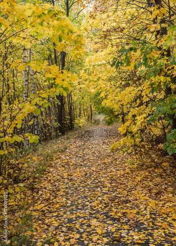 Foto op Canvas Weg in bos Pathway through the autumn forest