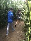 Teen siblings walking in a corn maze in the fall.