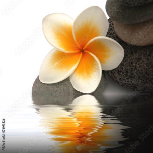 Fotobehang Plumeria fleur de frangipanier su galets sombres