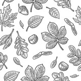 Seamless pattern leafs, acorn, chestnut and seed. Vector vintage engraving - 176103967