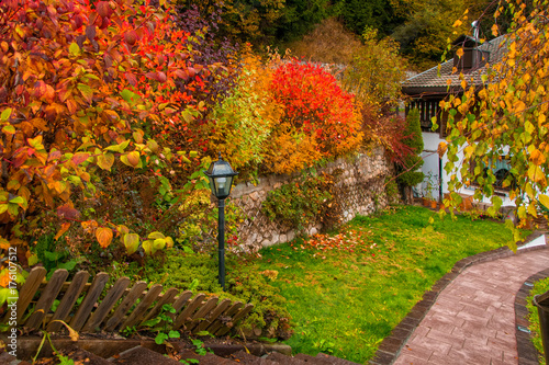 Colorful autumn bushes in country yard. Dolomite Alps, Italy © haidamac
