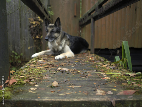 Poster Dog Lying On Footpath