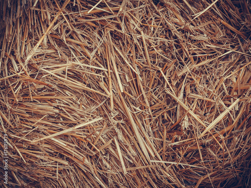 Papiers peints Herbe Detailed closeup of scattered hay