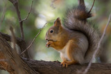 squirrel on a branch - 176116112