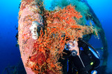 A SCUBA diver and large nudibranch on a coral encrusted shipwreck