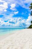 paradise tropical beach palm