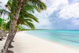 paradise tropical beach palm - 176119996