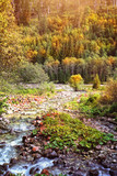 mountain stream in the autumn - 176128147