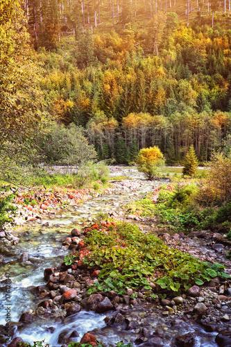 mountain stream in the autumn