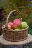 корзина с яблоками - 176128324