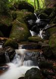 Herbstwanderung durch den Wald - 176130393