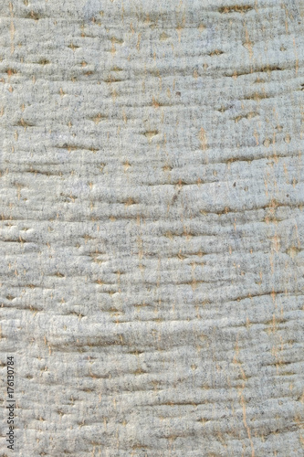 Papiers peints Baobab Baobab Tree Texture Background