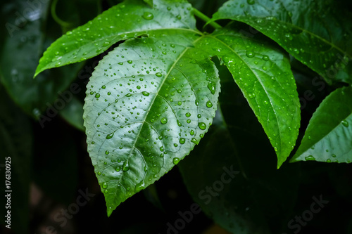 Fotobehang Natuur background texture green Leaf and water drop soft focus
