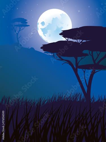 African Night Landscape