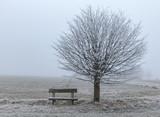 Baum mit Bank im Morgennebel mit Raureif überzogen - 176143970