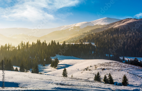 Keuken foto achterwand Beige spruce forest on snowy hills. gorgeous winter landscape in mountains