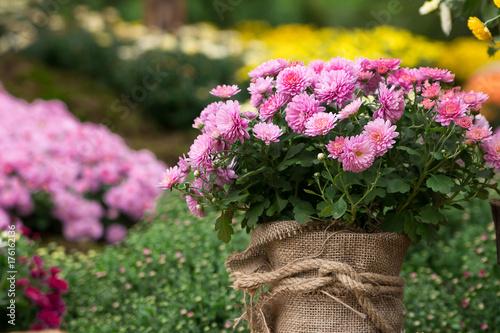Fridge magnet bouquet of beautiful chrysanthemum flowers outdoors