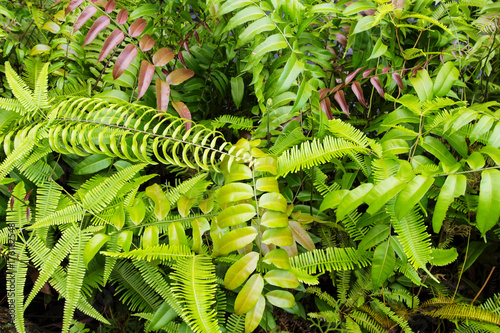 Foto op Plexiglas Landschappen Tropical greenery top view closeup photo. Tropical foliage with green fern leaf
