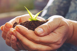 Woman  hands are holding the plant with adstract background. For preserve the environment of reforestation. - 176164536