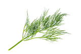 Fresh dill plant close up isolated on white background. - 176165378