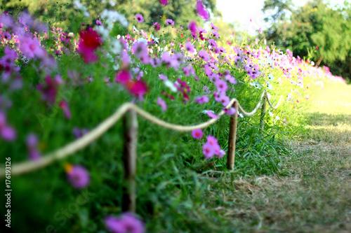 Poster Colorful flower garden