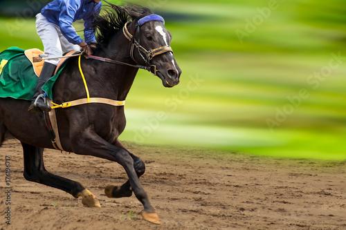 Fotobehang Paarden Race horse in run. A horse with a jockey runs along the racetrack track