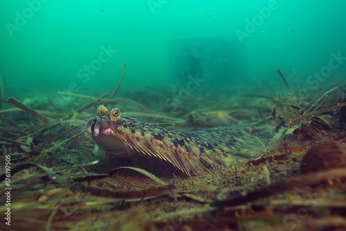 Deurstickers Groene koraal underwater landscape