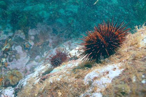 Foto op Canvas Groen blauw underwater landscape