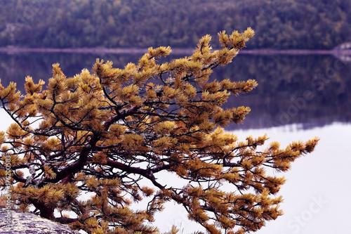 Staande foto Aubergine nature pine lake sky landscape