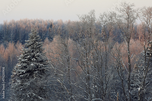 Poster Grijs frosty winter morning landscape nature sunny