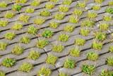 grass paver - 176204195