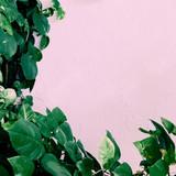 Plant on pink. Stylish green minimal art - 176210989
