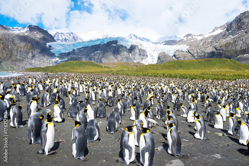 beautiful snow mountains and penguins