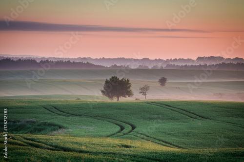 Fotobehang Zalm Wonderful dawn at foggy field in summer