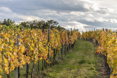 Deurstickers Wijngaard colorful autumn vineyards landscape