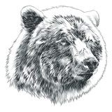 bear sketch head vector graphics in black-and-white monochrome pattern - 176227979