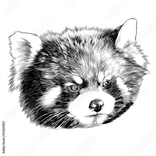 Fototapeta red Panda head sketch vector graphics monochrome black-and-white drawing