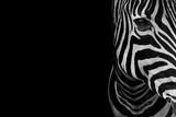 portrait of zebra. Black and white version. - 176253130