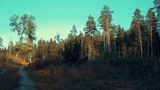 Pine forest edge in sunny September day. Dirt road. Wind movement - 176253550