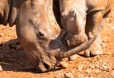 Mutter und Kind Nashorn, Namibia - 176253974