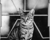 Young cat in black and white - 176254327